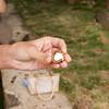 Cracking a Macadamia Nut