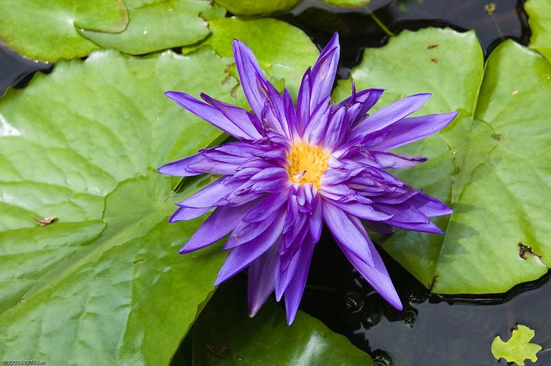 HAA Flower-1