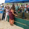 Hawaiian Green Sea Turtles-14