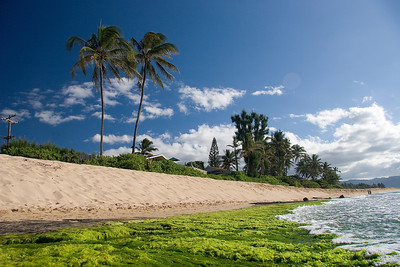 North Shore - beach - palm tree