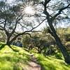 Oak View trail 2