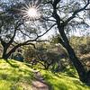 Oak View trail