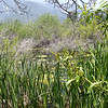 The lower pond in Los Rios Rancho nature trails in Oak Glen
