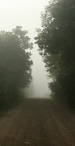 Early Morning Fog on Bull Hollow Road