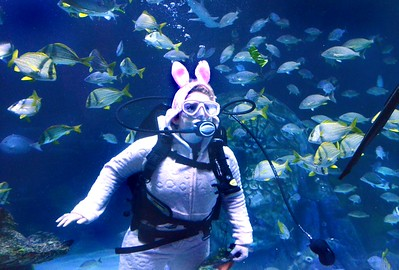 TOP-L-TT SEA LIFE Bunny 2