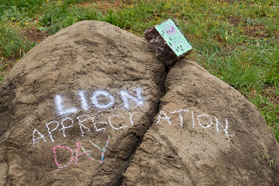 Lion Appreciation Day