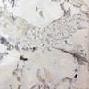 Group 5 - Alaska Granite - Total -$6,440 for whole kitchen area