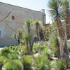 Jardin etnobotanico 1