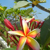 The Tropical Flowers Are Exquisite And Profuse