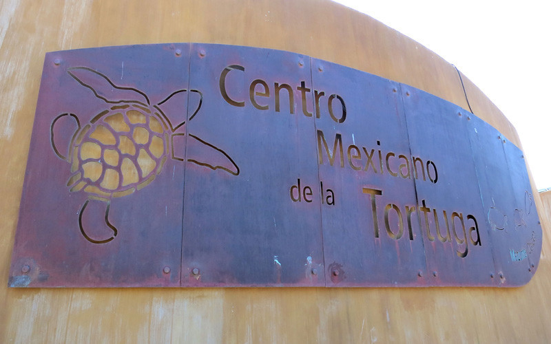 Centro Mexicano de Tortuga In Mazunte, Oaxaca