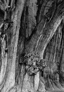 El tronco que florece 2.