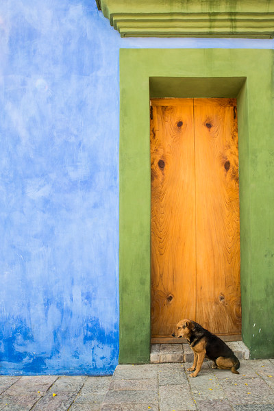 Patient Dog by the Blue Wall