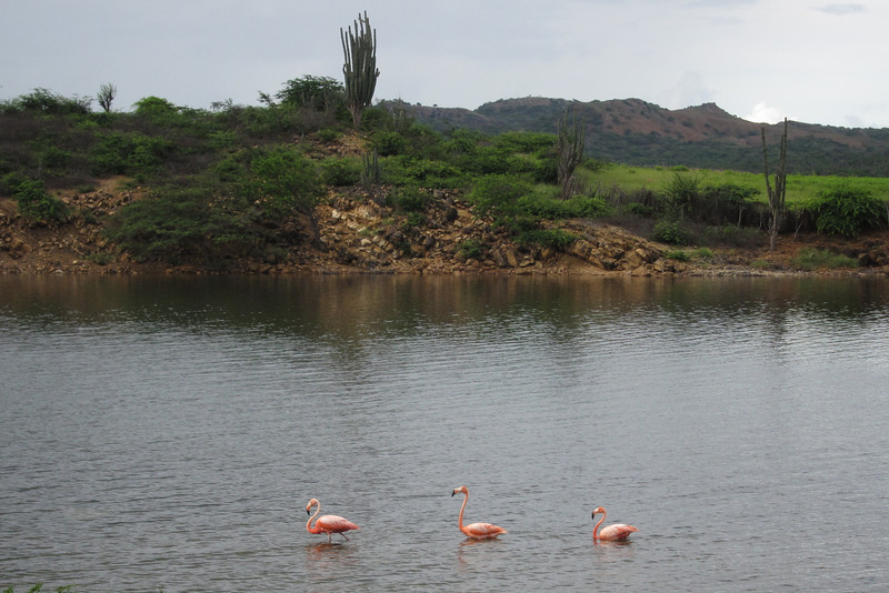 Lake Gotomeer in Bonaire, flamingo sanctuary.