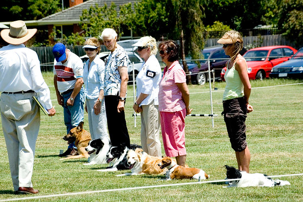 Obedience Trials