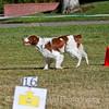 dpdtc_rally_2012-062