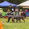 dmkc_rally_2012-0655