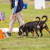 dmkc_rally_2012-0674