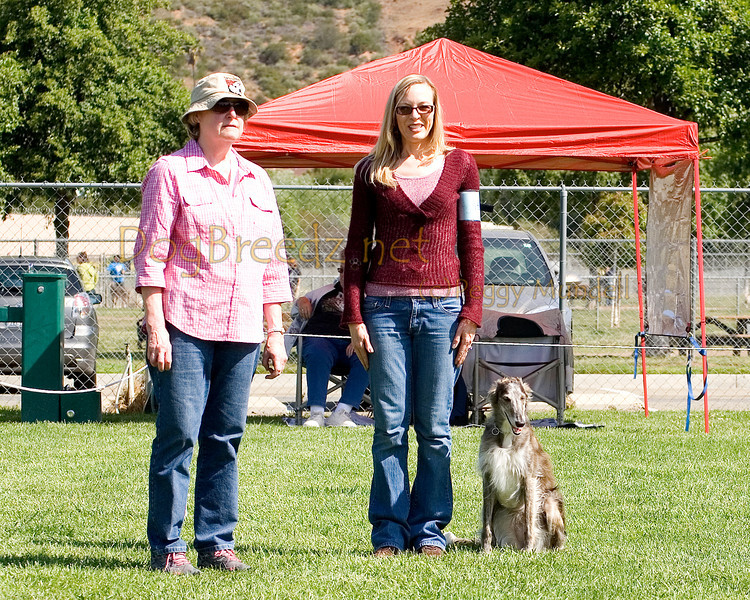 Silken Windhound.  The All Breed Obedience Club, Inc hosted a UKC Obedience Trial in Escondido, CA in April 2012.  This gallery is from the second show on Saturday May 7.  Judged by Jill Perry.