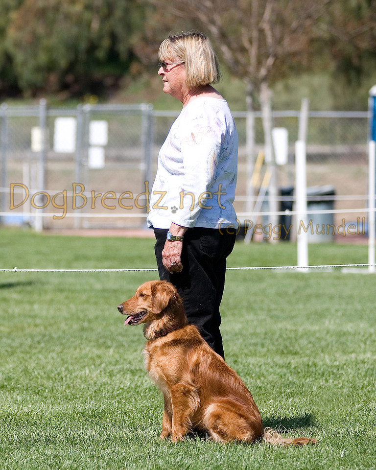 Golden Retriever.  The All Breed Obedience Club, Inc hosted a UKC Obedience Trial in Escondido, CA in April 2012.  This gallery is from the second show on Saturday May 7.  Judged by Jill Perry.