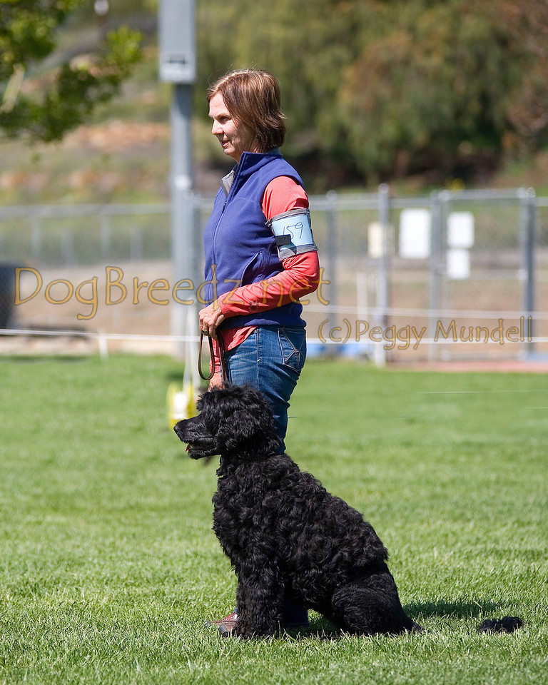 Portugese Water Dog.  The All Breed Obedience Club, Inc hosted a UKC Obedience Trial in Escondido, CA in April 2012.  This gallery is from the second show on Saturday May 7.  Judged by Jill Perry.