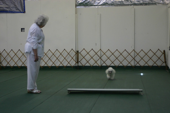 2007 Obedience/Rally Trial