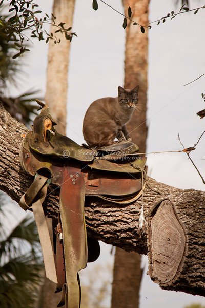 Cat in Saddle_SS9624