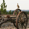 Old Wagon_SS1872