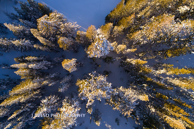 Carson Pass Winter 2017-11