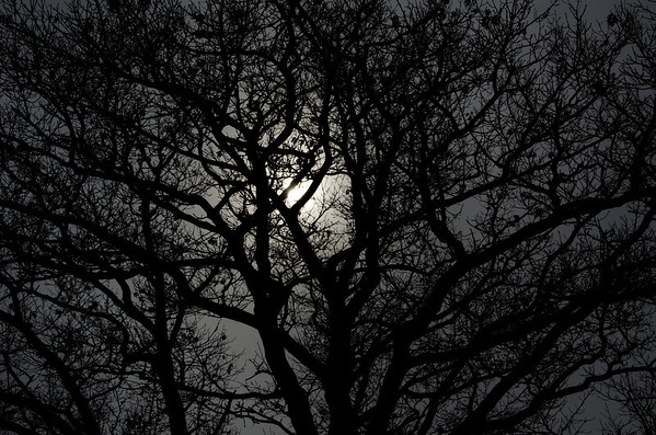 moonlight lace