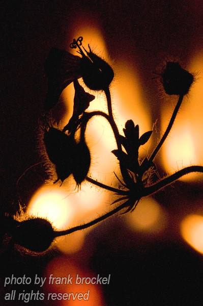 I was sitting by a fire and a flower kinda leaned into my view ...