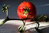 A tomato ready to eat