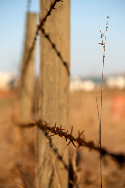 Rusted Barbed Wire Fence