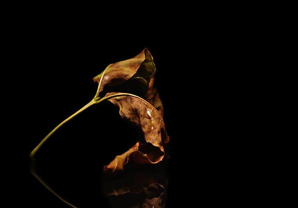 leaft
