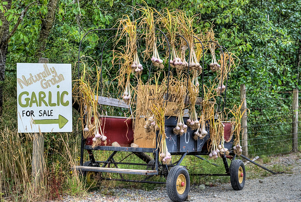Garlic Stand - Cowichan Valley, BC, Canada