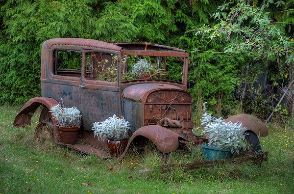 Rusty Antique Car Planter - Metchosin, Vancouver Island, BC, Canada