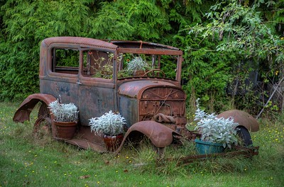 "Rusty Antique Car Planter - Metchosin, Vancouver Island, BC, Canada Visit our blog ""Headlights In The Field"" for the story behind the photo."