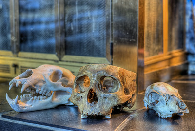 """Skulls - Private Collection Visit our blog """"A Private Collection"""" for the story behind the photos."""