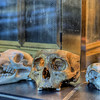"""Skulls - Private Collection Visit our blog """"<a href=""""http://toadhollowphoto.com/2012/02/21/a-private-collection/"""">A Private Collection</a>"""" for the story behind the photos."""