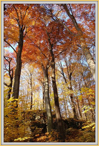 Podzim v hranickém polesí