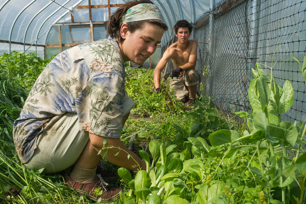 Julie Maerz and Time Travers pull weeds in Beth Gibbon's greenhouse. Hand weeding is an important part of most organic farming.