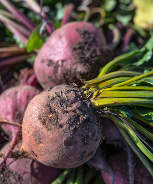 Beets afre among the root crops that Partick Theil specializes in.