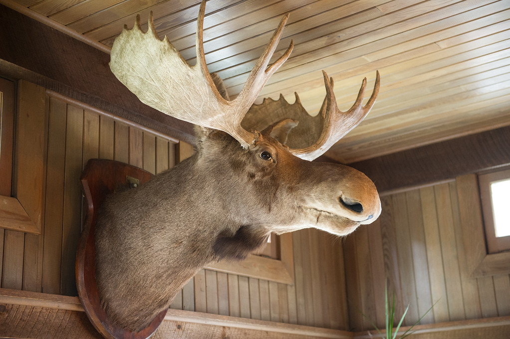 Even the moose seems happy.