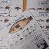 Greenpeace presenta su primera guía para identificar pescado de temporada