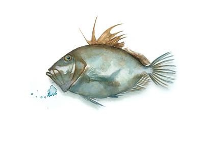 Guía de Pescado de Temporada