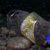 Damselfish - Defending Our Oceans Tour (Philippines: 2006)