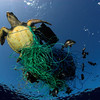 Turtle in a Trap - Defending Our Oceans (Mediterranean Sea: 2007)