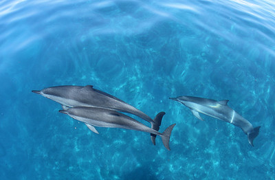 CLEAR BLUE DOLPHINS