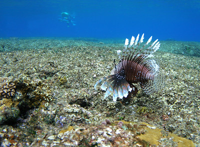 LION FISH-CLOUDBREAK-SURFER