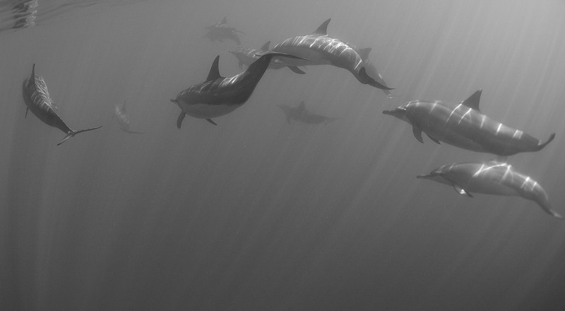 DOLPHINS BW 2