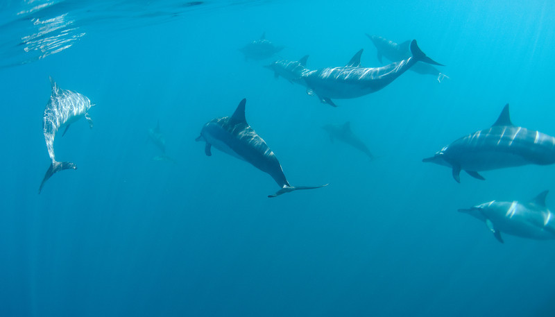 DOLPHINS COLOR 2